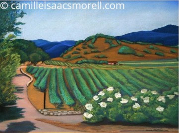 Morell_Napa Valley Vineyard