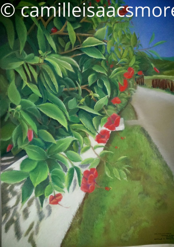 Red Hibiscus Hedge in Treasure Beach